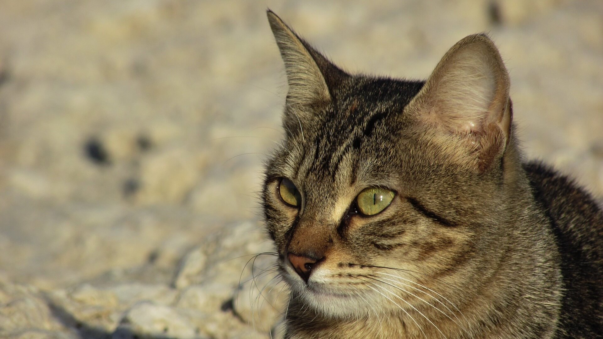 https://beckielindsey.com/2017/09/25/lessons-jesus-taught-me-through-a-stray-cat/