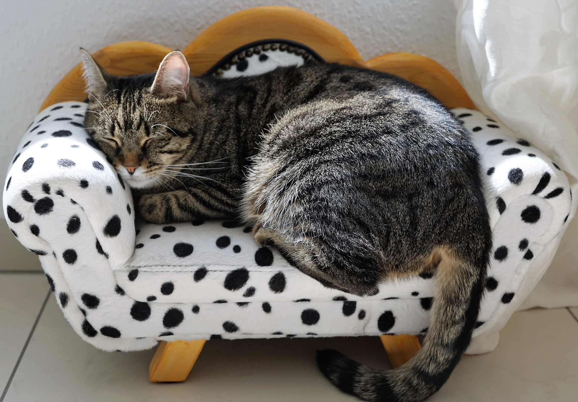 cat on a little couch